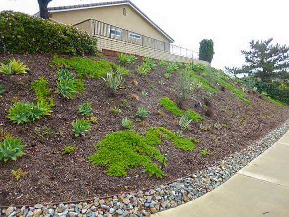 Slopes top quality landscapes for Hillside landscaping plants