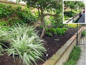 Lake Forest Side Yard Refurbish