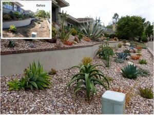 Anaheim Hills Terrace succulent landscaping