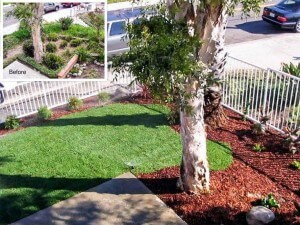 San Clemente Apartment Relandscaping