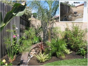 San Juan Capistrano Tropical Plant Transformation