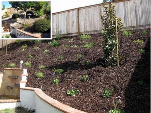 Laguna Hills Slope Renovation