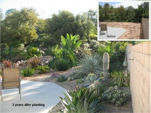 Mission Viejo Landscape Facelift After 2 Years